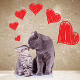 Chats embrassant le jour de valentines Photos libres de droits