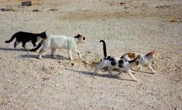Chats en Chypre Concept sans abri d'animaux Images stock