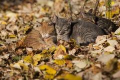 Chats en parc Photographie stock