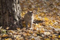 Chats en parc Images libres de droits