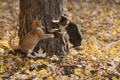 Chats en parc Photos stock