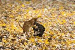 Chats en parc Photos libres de droits