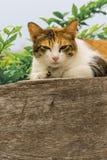Chats engraissés thaïlandais sur le mur en bois avec le fond d'arbre utilisé comme fond d'image Image stock