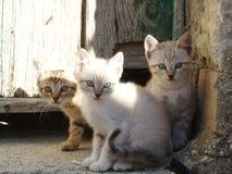 Chats et amis de chiens photos libres de droits