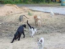 chats et chien 7 Photographie stock