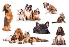 Chats et chiens Photos libres de droits