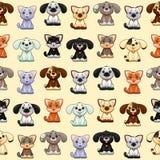 Chats et chiens drôles avec le fond Images stock