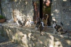 Chats grecs d'île de Leucade Images stock
