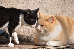 Chats jouant au soleil Photos stock