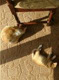 Chats jouant autour Photos stock