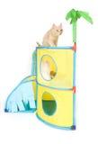 Chats jouant sur le fond blanc Photos stock
