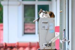 Chats mignons Photos libres de droits