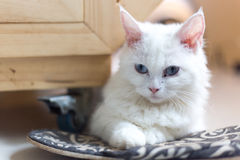 Chats mignons, beaux chats Photo stock