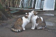 Chats mignons dans l'amour Chats de rue Chats drôles dans la rue Photo stock