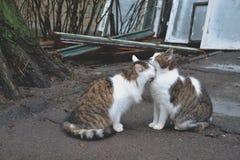 Chats mignons dans l'amour Chats de rue Chats drôles dans la rue Image stock