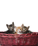 Chats mignons dans le panier Images stock