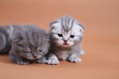 Chats mignons de bébé Photographie stock