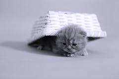 Chats mignons de bébé Photos libres de droits