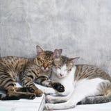 Chats mignons de couples dormant ensemble fond concret gris Photos libres de droits