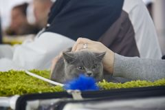 Chats mignons et beaux Photographie stock libre de droits