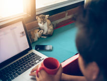 Chats mous de bébé d'image avec l'homme travaillant à l'ordinateur portable et au café de boissons Images libres de droits