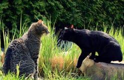 Chats noirs et gris sur le jardin Photographie stock libre de droits