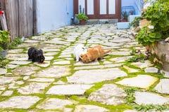 Chats sans abri mangeant sur des aliments pour chats de rue Photo libre de droits