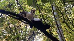 Chats sans abri sur l'arbre banque de vidéos