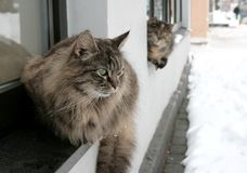Chats sans foyer Photographie stock