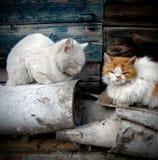 Chats sans foyer Photos stock