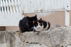 Chats sauvages Image stock
