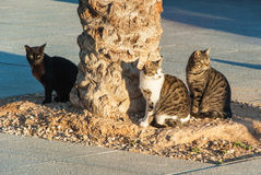 Chats se reposant sur la rue Photo stock