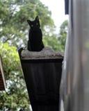 Chats se reposant sur le toit Photographie stock
