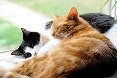 Chats snuggling ensemble Photo stock
