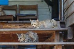 Chats sur des escaliers Photos stock