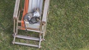 Chats sur la chaise longue Image libre de droits