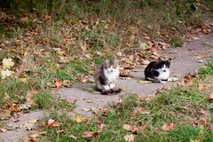 Chats sur la route Photographie stock