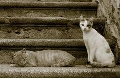 Chats sur les escaliers Photo stock
