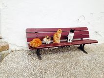 Chats sur un banc Photographie stock libre de droits