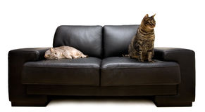 Chats sur un sofa Photos stock