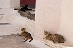 Chats sur Samos Images stock