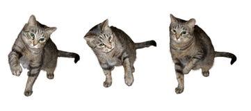 chats trois Image libre de droits