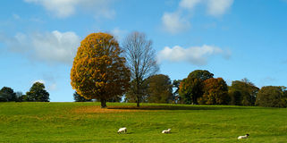 Chatsworth公园 库存照片