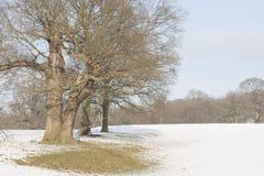 Chatsworth, Derbyshire Imagens de Stock