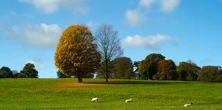 Chatsworth parkerar Arkivfoton