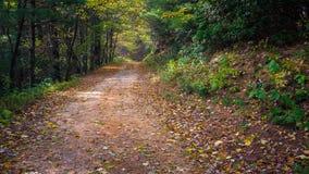 Chattahoochee国家森林路 免版税库存照片