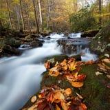 Chattahoochee staatlicher Wald Stockfotografie