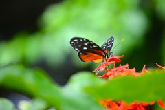 Chattanooga-Schmetterlings-Atrium Lizenzfreie Stockfotos
