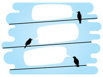 Chatting birds on wires Stock Photography