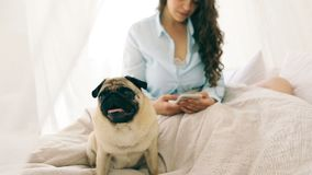 Chatting with cellphone woman sitting on the bed in light cozy bedroom with dog pug. Video footage stock video